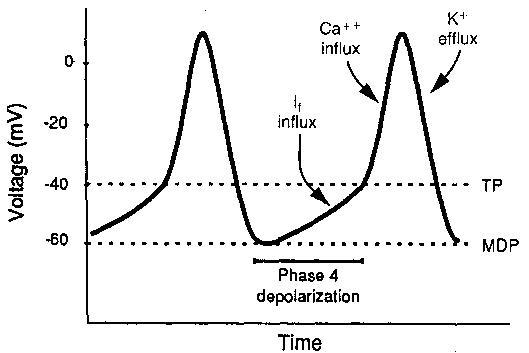 Gambar-3.-Potensial-membran-sel-pacemaker.-MDP-maximum-negative